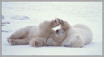دو خرس دوست