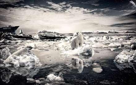 خرس قطبي سياه و سفيد