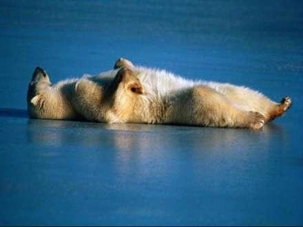 حمام آفتاب يك خرس قطبي