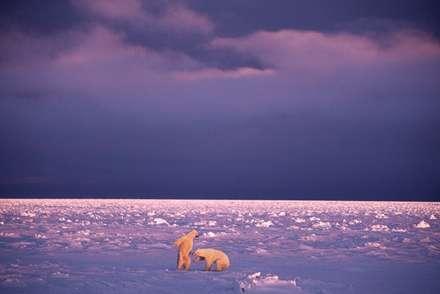 نمايي از غروب قطب