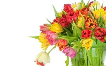 گلهاي لاله با رنگهاي مختلف صورتي و قرمز و زرد و نارنجي و سفيد همراه با برگ داخل گلدان