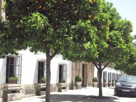 درختهاي باردار پرتقال کنار خيابان