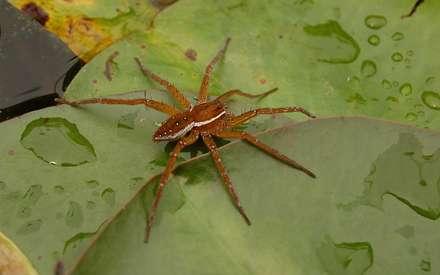 عنکبوتي روي برگ سبز