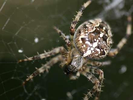 عنکبوتي روي تار خويش