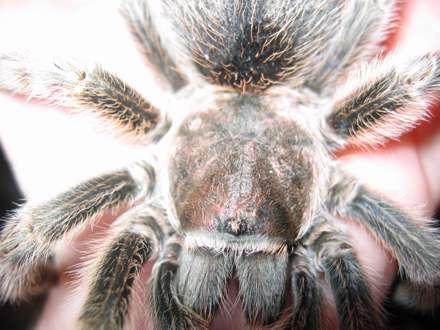 عنکبوتي از نزديک