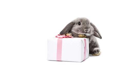 کادوی خرگوش