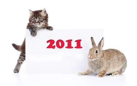 دوستی خرگوش با گربه