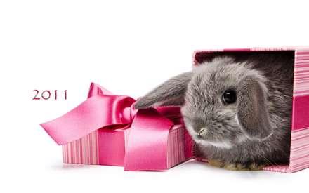 خرگوش کادوپیچ شده