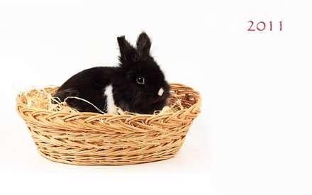 خرگوش سیاه