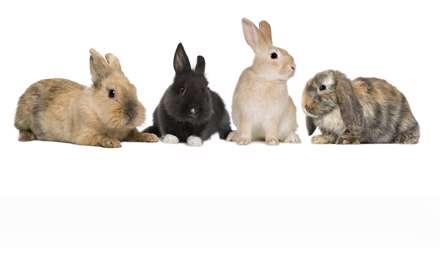 خرگوش های باهوش