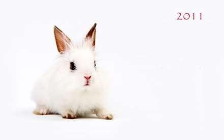 خرگوش تنها