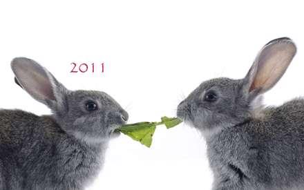 غذای خرگوش ها