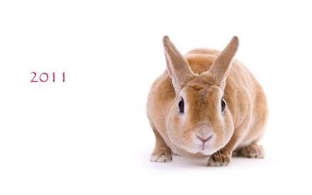 خرگوش زیبا