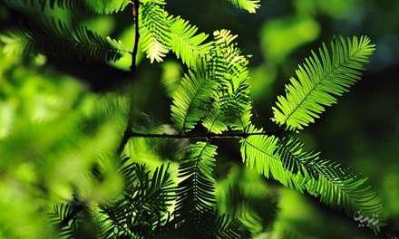 برگ های سبز درختان