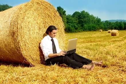 تجارت اینترنتی در علف زار
