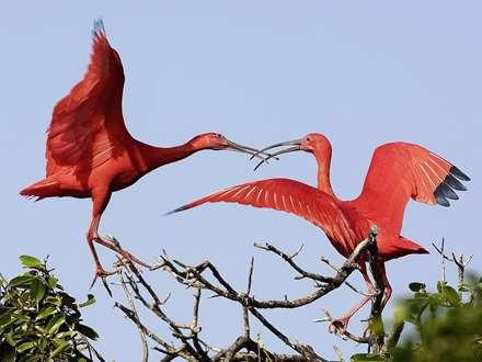 پرنده های زیبا