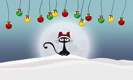 گربه ای با کلاه قرمز میان برف ها