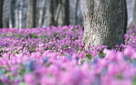 زمین پوشیده از گل های صورتی