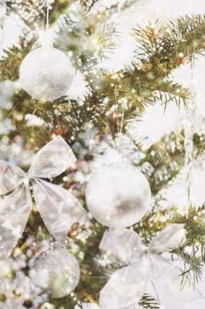 درخت یخ زده