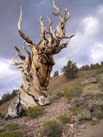 پیر ترین موجود زنده دنیا