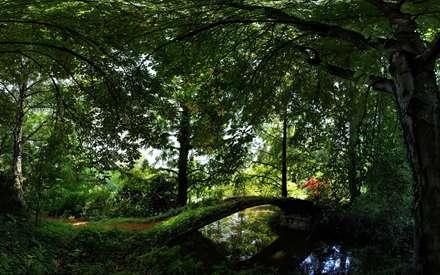 جنگل بسیار زیبا