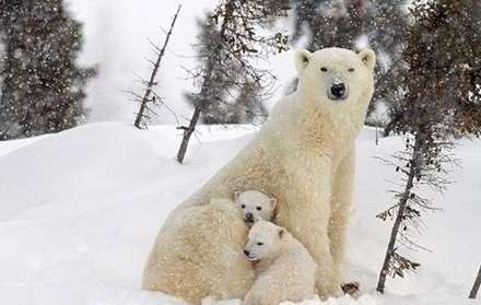 تصاویری از یک خانواده دوست داشتنی!