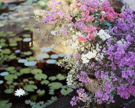 تصویر زمینه گل های ریز
