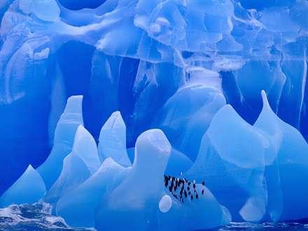 پنگوئن ها روی کوه یخ