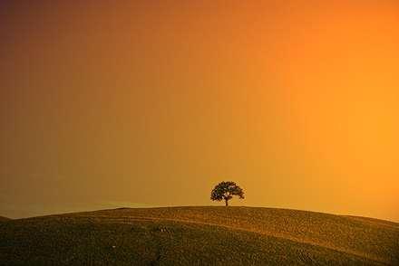 غروب تک درخت تنها