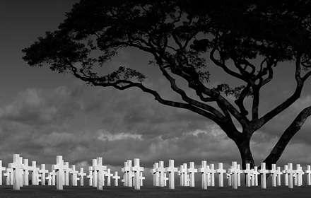 تک درخت در میان فراموش شدگان