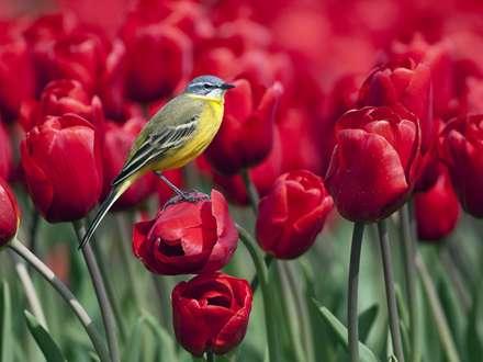 پرنده در لاله زار