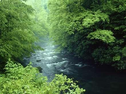 رودخانه میان پارک جنگلی