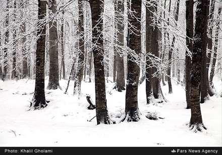طبیعت زمستانی تالش گیلان