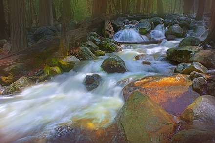 رودخانه ای میان جنگل