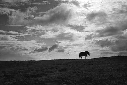 اسب تنها