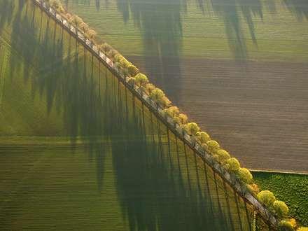 جاده میان مزرعه