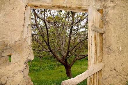 درخت از قاب دیوار کاه گلی