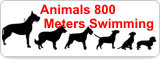 Animal 800 Meters Swimming