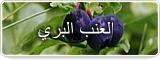 العنب البري يمنع نمو الخلايا الدهنية