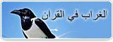 الغراب في القرآن