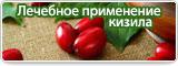 Лечебное применение кизила