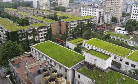 پشت بام های سبز: