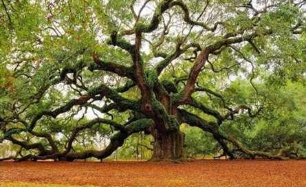 درختی با شاخه های عجیب
