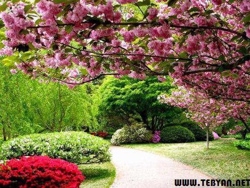 عکس طبیعت زیبای بهاری