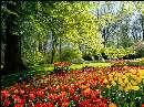 نگاهی به گل های سرزمین گل ها