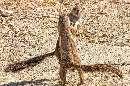 تصاویری بسیار زیبا از رقص دو سنجاب