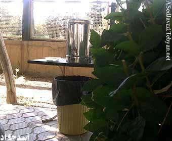 فلاكس چاي پشت درختها