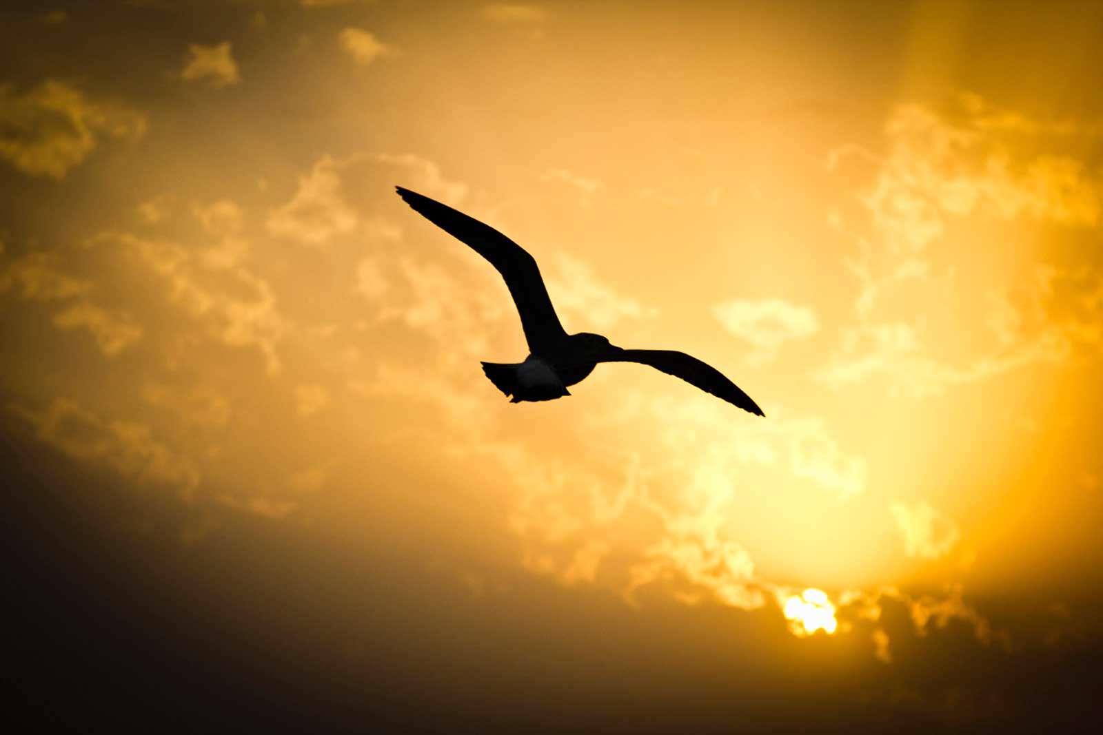 پرواز پرنده