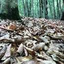 تصاویری از جنگل کلاردشت