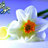 گل گوزلیم( بیا زیبایم )